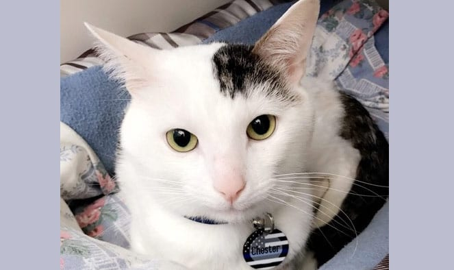'Merciless' cat abuser sentenced to 15 months in jail, heavy restitution